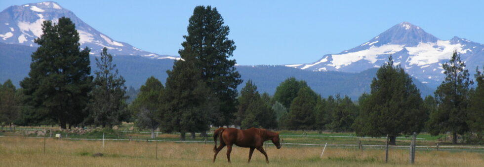 Horse Property Home Search