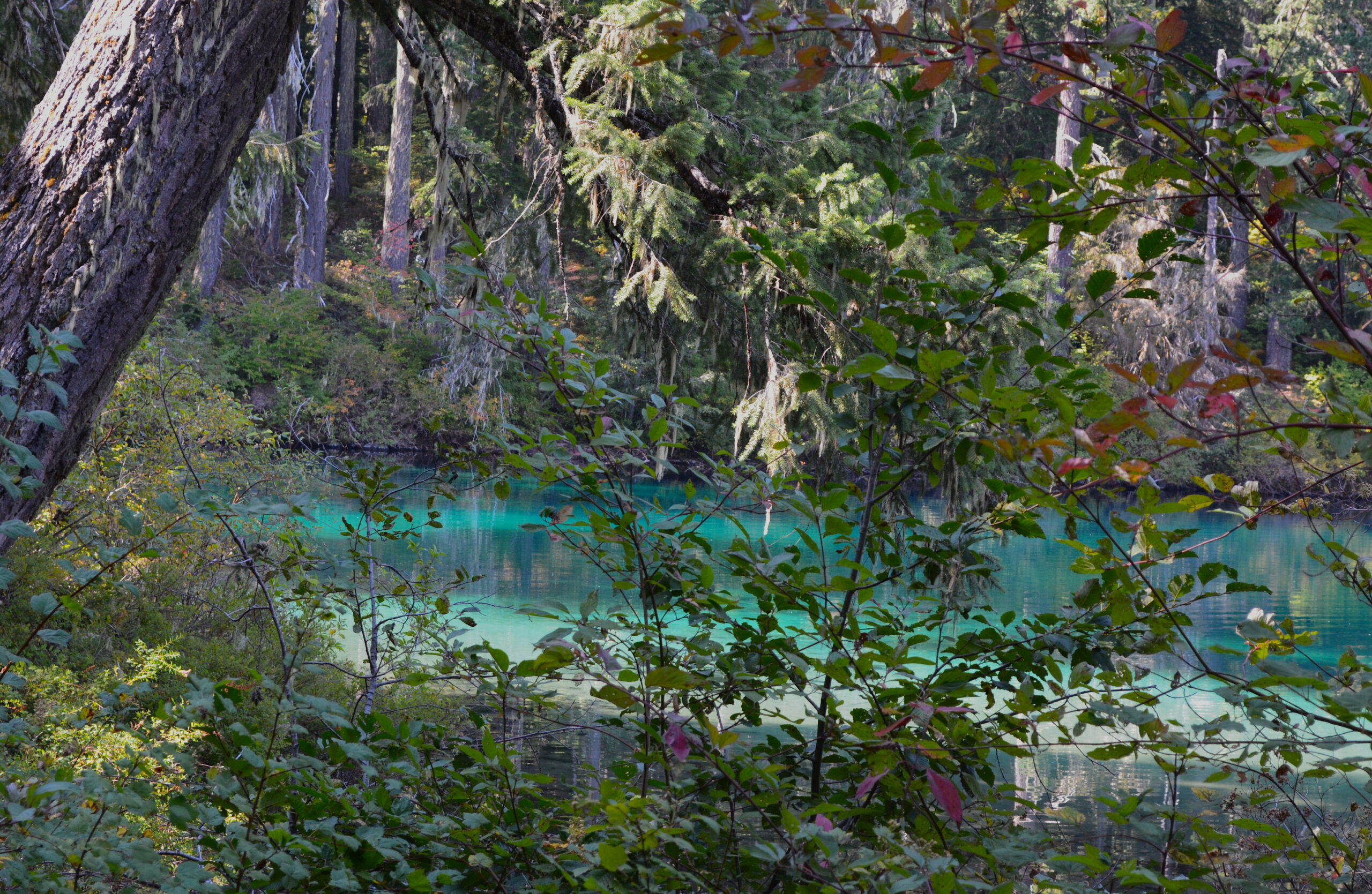 Day Tripping: Clear Lake & Coldwater Cove Campground
